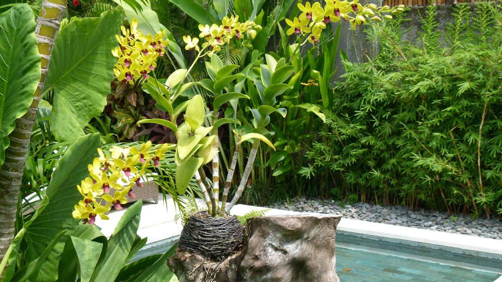 Elegant Orchids Of The Garden